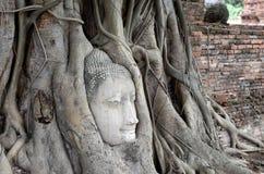 Het oude hoofd van Boedha in wortel grote boom, zijschot Royalty-vrije Stock Fotografie