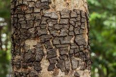 het oude hout en textuur detailleren Stock Afbeelding
