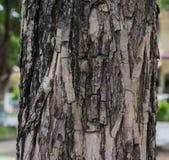 het oude hout en textuur detailleren Royalty-vrije Stock Foto