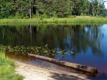 Het oude houten hout ligt in kuststruikgewas van aquatische installaties Royalty-vrije Stock Foto