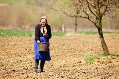 Het oude landbouwersvrouw zaaien Stock Afbeelding