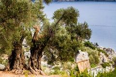 Het oude Lycian-graf dichtbij de oude half-dried olijven in S Royalty-vrije Stock Afbeelding
