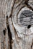 Het oude rustieke droge hoogtepunt van de bederf houten die raad van wormholes door woodwo wordt gemaakt royalty-vrije stock afbeeldingen