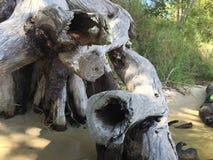 Het oude strand van de boomboomstam Royalty-vrije Stock Fotografie