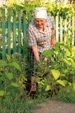 Het oude vrouw werken stock fotografie