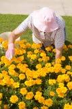 Het oude vrouwen tuinieren Stock Afbeeldingen
