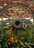 Het oude Wiel van de Kar Royalty-vrije Stock Foto