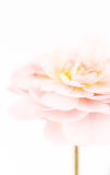Het ouderwetse pastelkleurroze nam toe Royalty-vrije Stock Foto