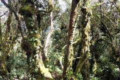 Het Oudste Bemoste Bos van de wereld stock afbeelding