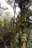 Het Oudste Bemoste Bos van de wereld royalty-vrije stock afbeelding