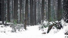 Het overgaan van Weg door Hout in de Sneeuw stock videobeelden