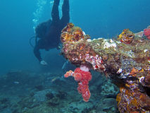 Het Overhangend gedeelte van het koraal Stock Fotografie