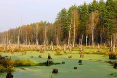 Het overstroomde bos Royalty-vrije Stock Foto's