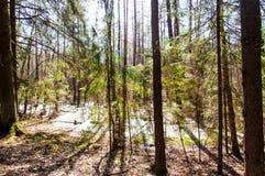 Het overstroomde bos werd moeras royalty-vrije stock foto's
