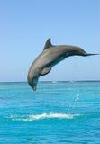 Het overtredende overzees van de dolfijn Stock Foto