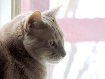 Het overwegen van Kat in Venster stock foto