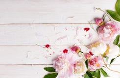 Het overweldigen van roze pioenen op witte rustieke houten achtergrond De ruimte van het exemplaar