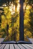 Het overweldigen van trillend de Herfstlandschap van zonnestraal door bomen in F Stock Afbeeldingen