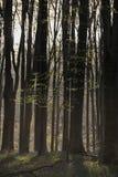 Het overweldigen van vroeg ochtend boslandschap in de Lente met zonlicht Royalty-vrije Stock Foto's