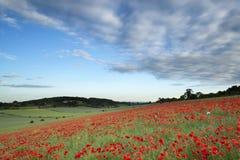 Het overweldigende landschap van het papavergebied onder de hemel van de de Zomerzonsondergang royalty-vrije stock afbeelding