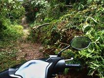 Het overwinnen van Forest Path op een Motor Stock Foto's
