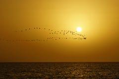 Het overzees, de vlucht van de vogel tegen een daling Royalty-vrije Stock Afbeeldingen