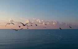 Het overzees en de aalscholvers van de zonsopgang Stock Afbeelding