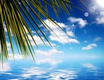 Het overzees en de palm doorbladeren. Royalty-vrije Stock Fotografie