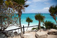 Het overzees en de palmen Royalty-vrije Stock Afbeeldingen