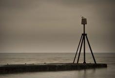 Het overzees en een vogel Stock Foto