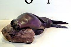 Het Overzees Lion Resting van Californië stock foto