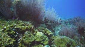 Het overzees ranselt koralen op een koraalrif stock video