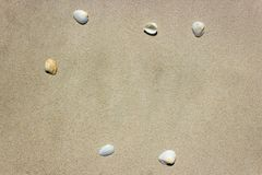 Het overzees Shell met zand op het strand is de achtergrond De ruimte van het exemplaar stock fotografie