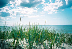 Het overzees van de zomer. Een mening van sandhill Stock Afbeeldingen