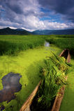 Het overzees van het gras van Meer Lugu Stock Afbeeldingen