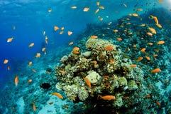 Het overzees van het koraal scape Stock Afbeelding
