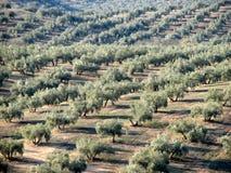 Het overzees van olijven in Andalucia 6 Royalty-vrije Stock Foto's