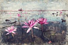 het overzees van rode lotusbloem bij het nationale park van Nong Han Lake, Udon Thani stock afbeelding