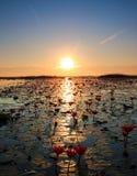 Het overzees van rode lotusbloem, Meer Nong Harn, Udon Thani, Thailand Stock Foto's