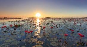 Het overzees van rode lotusbloem, Meer Nong Harn, Udon Thani, Thailand royalty-vrije stock afbeeldingen