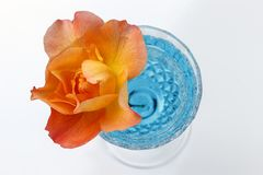 Het overzicht van sinaasappel nam in een waterglas toe royalty-vrije stock foto