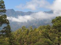 Het overzien van een beboste berg Stock Afbeeldingen