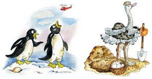 Het paar en de struisvogel van de pinguïn Stock Afbeeldingen