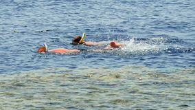 Het paar snorkelt bij de tropische overzeese toevlucht stock footage