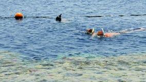 Het paar snorkelt bij de tropische overzeese toevlucht stock videobeelden