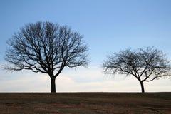 Het Paar van de boom royalty-vrije stock afbeeldingen