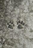 het paar van de dierlijke sleep van de drukkenkat bevroor op een concrete weg in Th royalty-vrije stock afbeelding
