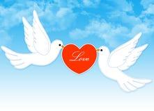 Het paar van de duif met hart Royalty-vrije Stock Afbeeldingen