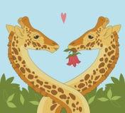 Het Paar van de giraf Stock Afbeelding