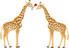 Het paar van de giraf Stock Afbeeldingen